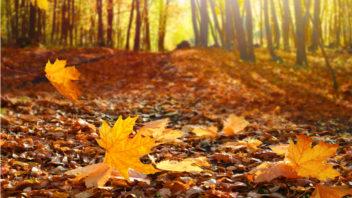jesen-352x198.jpg