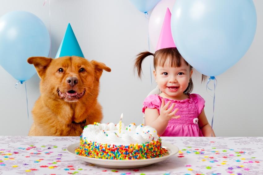 dieta-pes-oslava-torta-baloniky-istock_000018785653.jpg